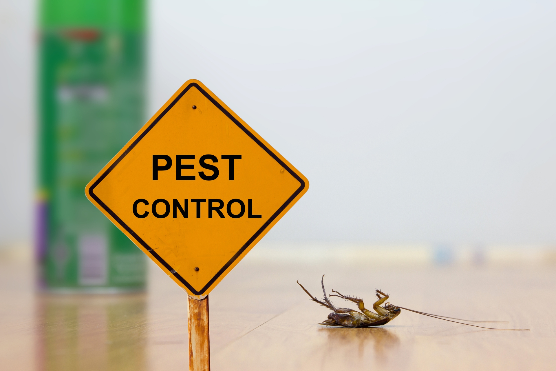 24 Hour Pest Control, Pest Control in Wembley Park, HA9. Call Now 020 8166 9746